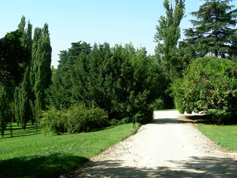 Tejos del parque del oeste arbolesdemadrid for Cementerio jardin del oeste