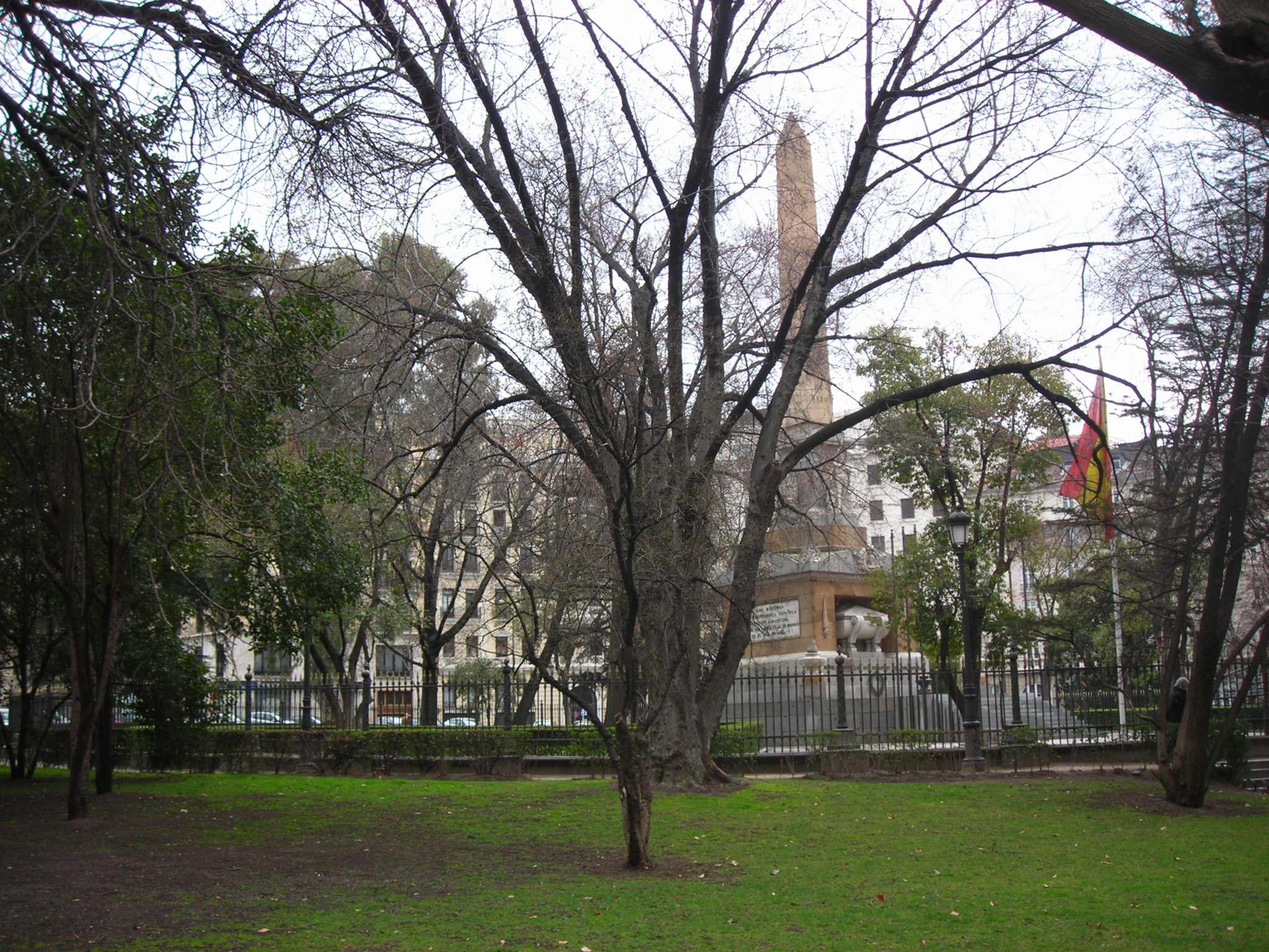 Arce sacarino plaza de la lealtad arbolesdemadrid - Arce arbol espana ...