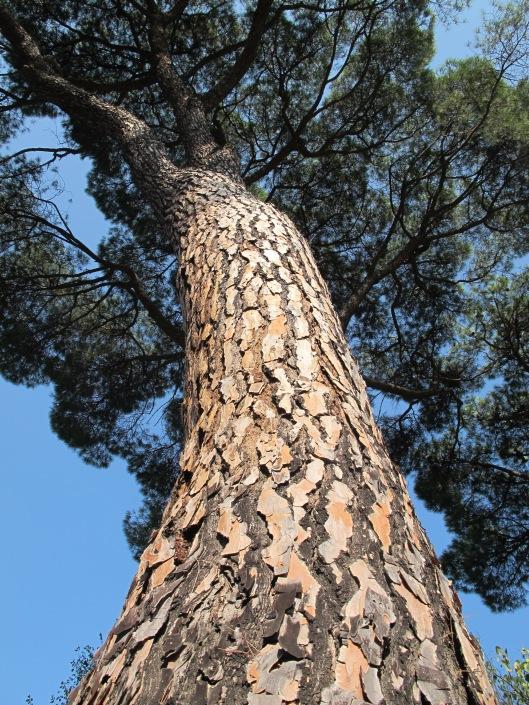 """""""Alto, alto como un pino..."""""""
