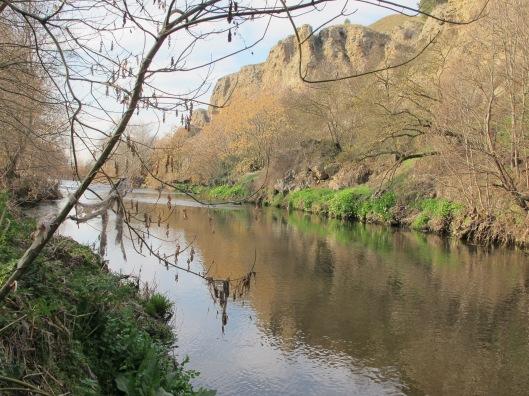 El río Manzanares junto al chopo